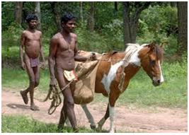 chenchu india